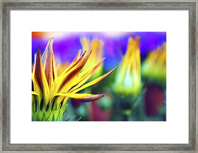 Colorful Flowers Framed Print by Sumit Mehndiratta