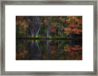 Colorful Forest Framed Print by Karol Livote