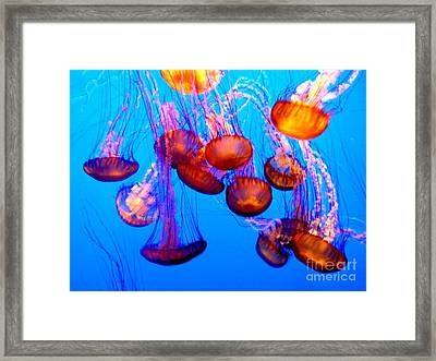 Colorful Jellies Framed Print