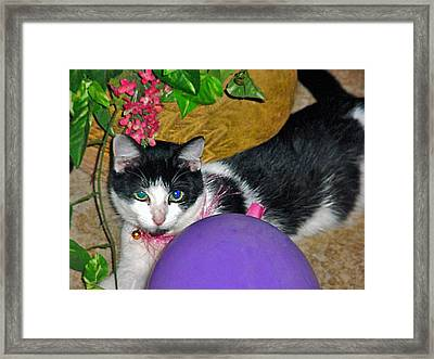 Colorful Kitty Framed Print by Elisia Cosentino