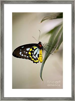 Colorful Lady Framed Print by Leslie Leda