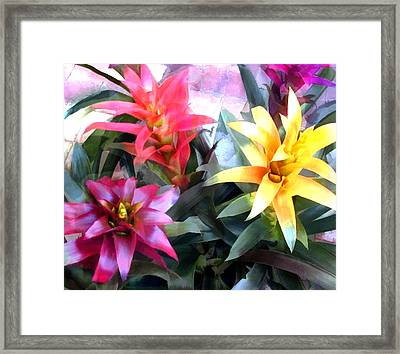 Colorful Mixed Bromeliads Framed Print by Elaine Plesser