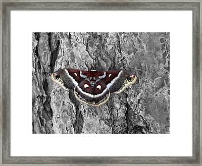 Colorful Moth Framed Print by James Steele
