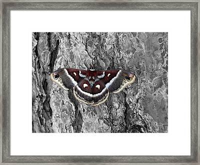 Colorful Moth Framed Print