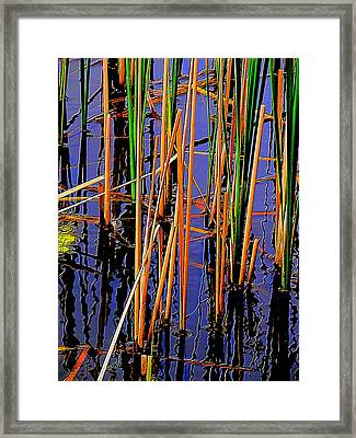 Colorful Reeds Framed Print by Beth Akerman