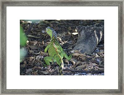 Framed Print featuring the photograph Colorful Reptile by Jerry Cahill