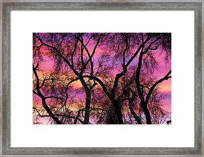 Colorful Silhouetted Trees 21 Framed Print by James BO  Insogna