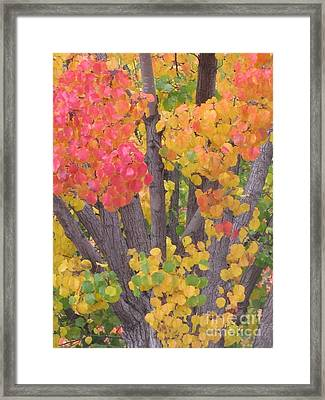 Framed Print featuring the photograph Colorful by Tina Marie