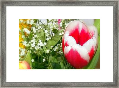 Colorful Tulip Framed Print by Jose Lopez
