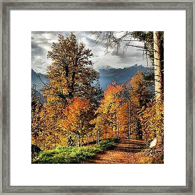 Colori D'autunno Framed Print