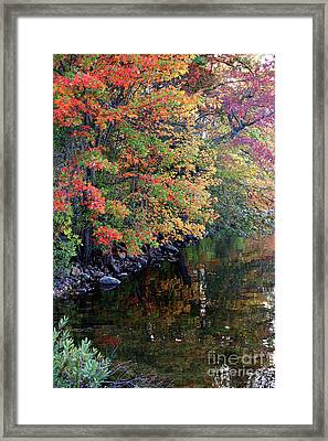 Colors Framed Print by Adrian LaRoque