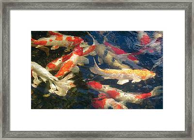 Framed Print featuring the photograph Colors by Dan Menta