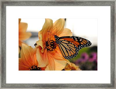 Framed Print featuring the photograph Colors In Sync by Michael Frank Jr