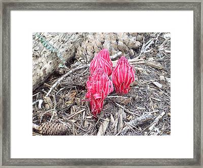 Colors In The Mountains Framed Print by Steve Huang