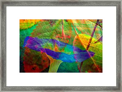 Colors Of Autumn Framed Print by Shirley Sirois