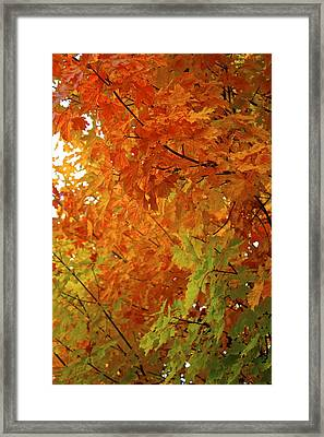 Framed Print featuring the photograph Colors Of Autumn by Sylvia Hart