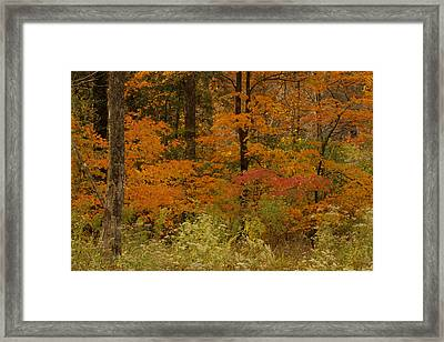 Colors Of Fall Framed Print