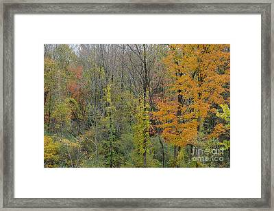 Colors Of Fall Framed Print by Linda Seacord