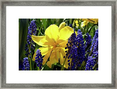 Framed Print featuring the photograph Colors Of Spring by Pravine Chester