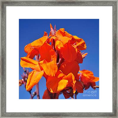 Colors Of Summer Framed Print by Kaye Menner