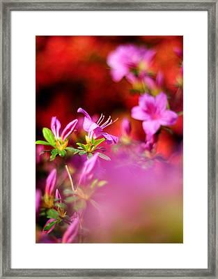 Colors Framed Print by Rebecca Sherman