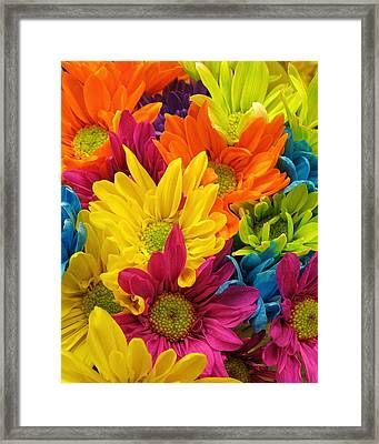Colossal Colors Framed Print