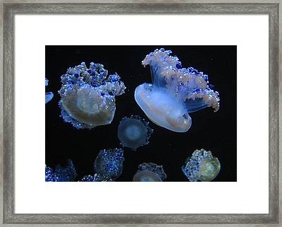 Colour Down Under Framed Print