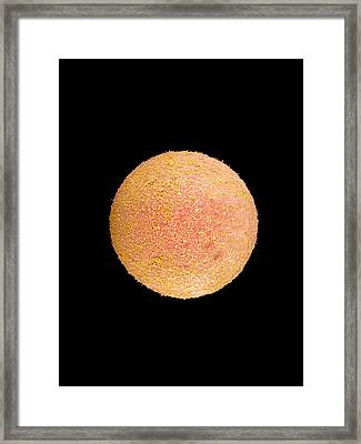 Coloured Sem Of A Fertilized Human Egg (zygote) Framed Print by Dr Yorgos Nikas