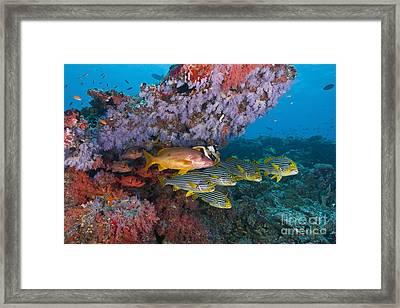 Colourful Reef Scene, Ari And Male Framed Print
