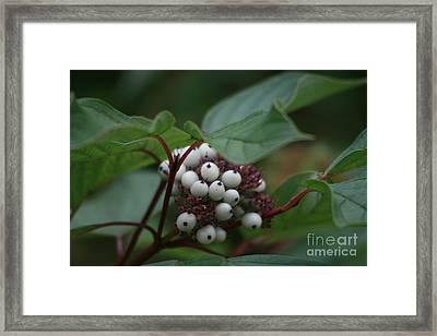 Colours Of Autumn Framed Print by Valia Bradshaw