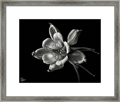 Columbine In Black And White Framed Print by Endre Balogh