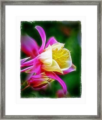 Columbine Framed Print by Judi Bagwell