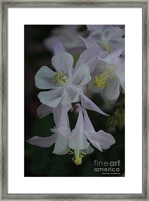 Framed Print featuring the photograph Columbine by Tannis  Baldwin