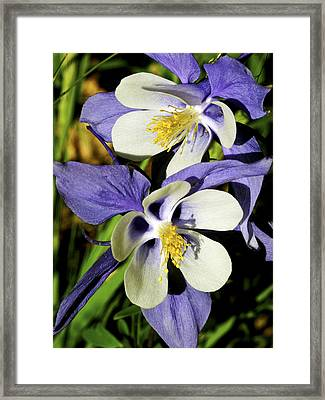 Columbine Twins Framed Print