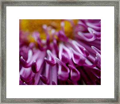 Come Closer Framed Print by Christy Phillips