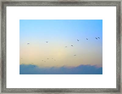 Come Fly With Me Framed Print by Bill Cannon