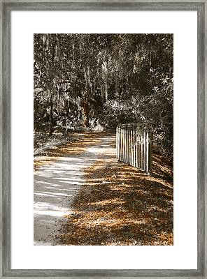 Come Follow Me Framed Print by Carolyn Marshall