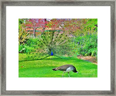 Framed Print featuring the photograph Come Here Often by John King