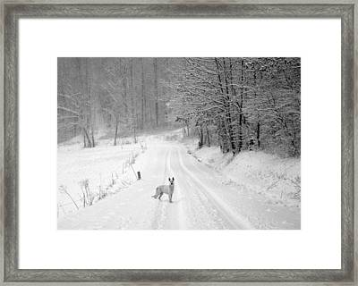 Come On Framed Print by Cheryl Helms
