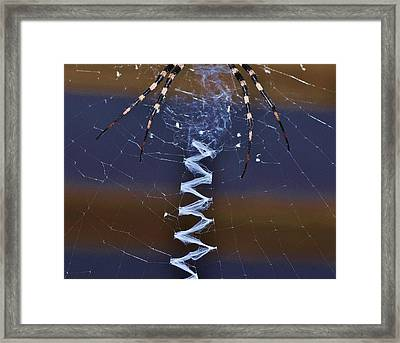 Come On Up Framed Print