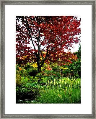 Come Walk With Me ... Framed Print