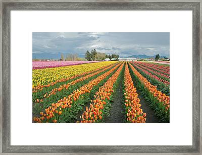 Comes In All Flavors Framed Print by Kent Sorensen