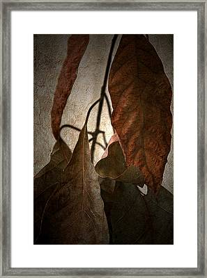Comfort Framed Print by Bonnie Bruno