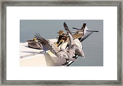 Coming Aboard Framed Print by Paulette Thomas