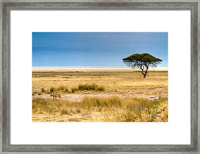 Framed Print featuring the photograph Coming Home by Juergen Klust