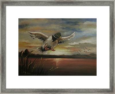 Coming Home Framed Print by Laura Brown