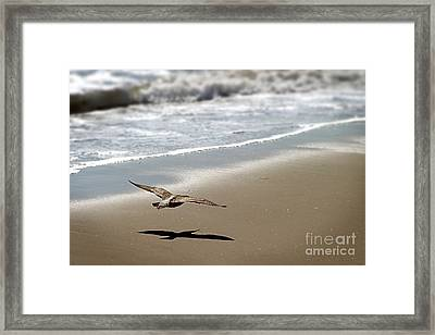 Coming In For Landing Framed Print