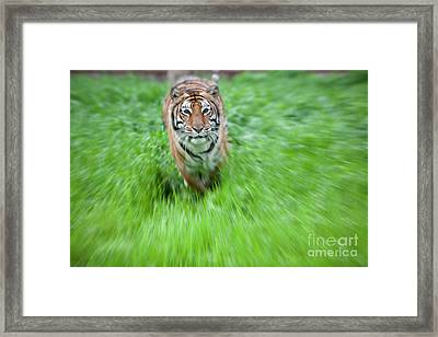 Coming To Get You Framed Print