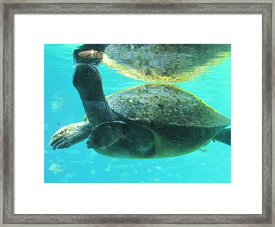 Framed Print featuring the photograph Coming Up For Air by Shawn Hughes