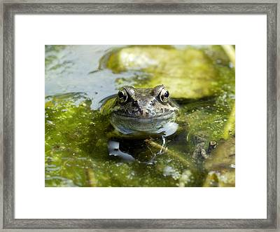 Common Frog Framed Print by Dr Jeremy Burgess